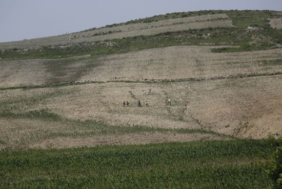 Північна Корея поскаржилася на найбільшу за майже 40 років посуху