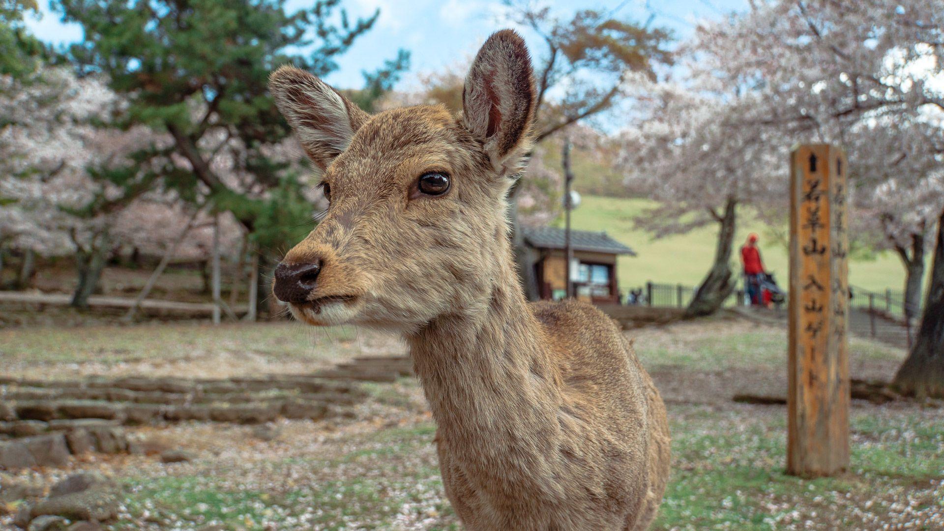 Кіото, бодо, для блогів_5