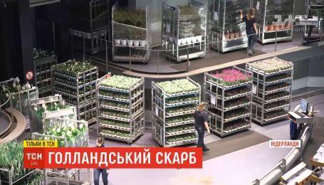 Голландський скарб: на аукціоні в Нідерландах за день продають 30 мільйонів квітів