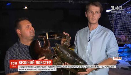 Работники рибопероробной компании в Бельгии пожалели лобстера из-за почтенного возраста