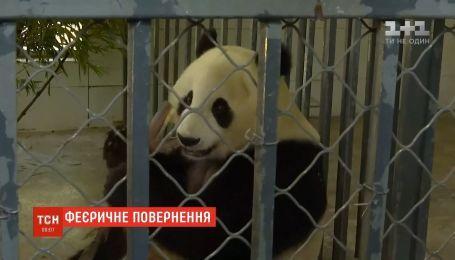Панда Баюн після 20-річного життя в зоопарку Сан-Дієго повернулася в Китай з дитинчам