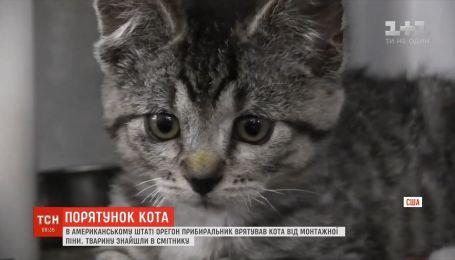В американском штате Орегон уборщик спас кота от монтажной пены