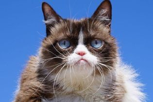 Померла знаменита сердита кішка Grumpy Cat