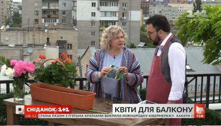 Як прикрасити свій балкон квітами задешево