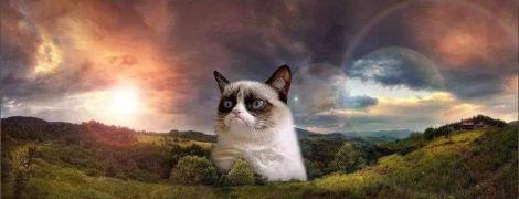 """""""Проблема людей в том, что они существуют"""": самые циничные мемы с сердитым котиком Грампи Кэт"""
