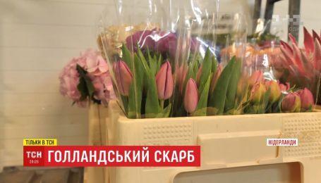 Голландское сокровище: нелегкий путь тюльпана в Украину