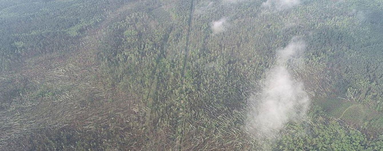 На Житомирщине мощный ураган за считанные минуты повалил 100 га леса