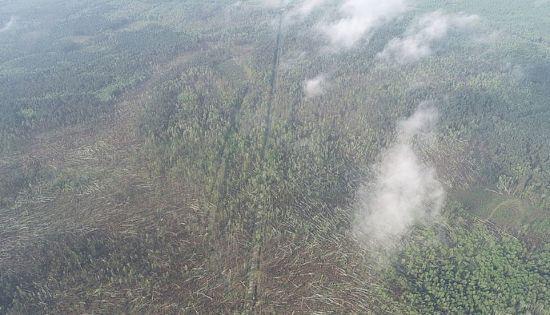 На Житомирщині потужний буревій за лічені хвилини повалив 100 га лісу