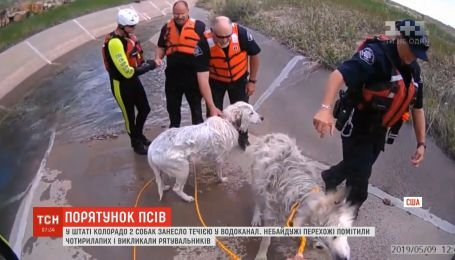 В штате Колорадо из водоканала спасли двух домашних собак