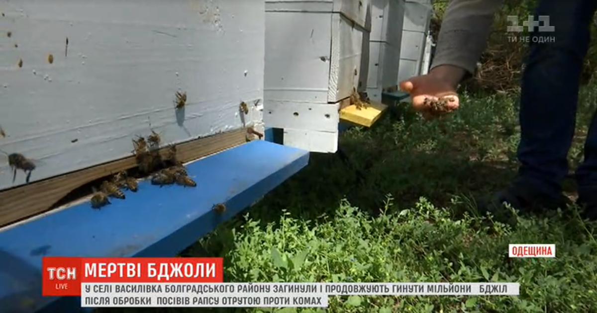 В Одесской области погибли миллионы пчел из-за яда, которым фермер обр