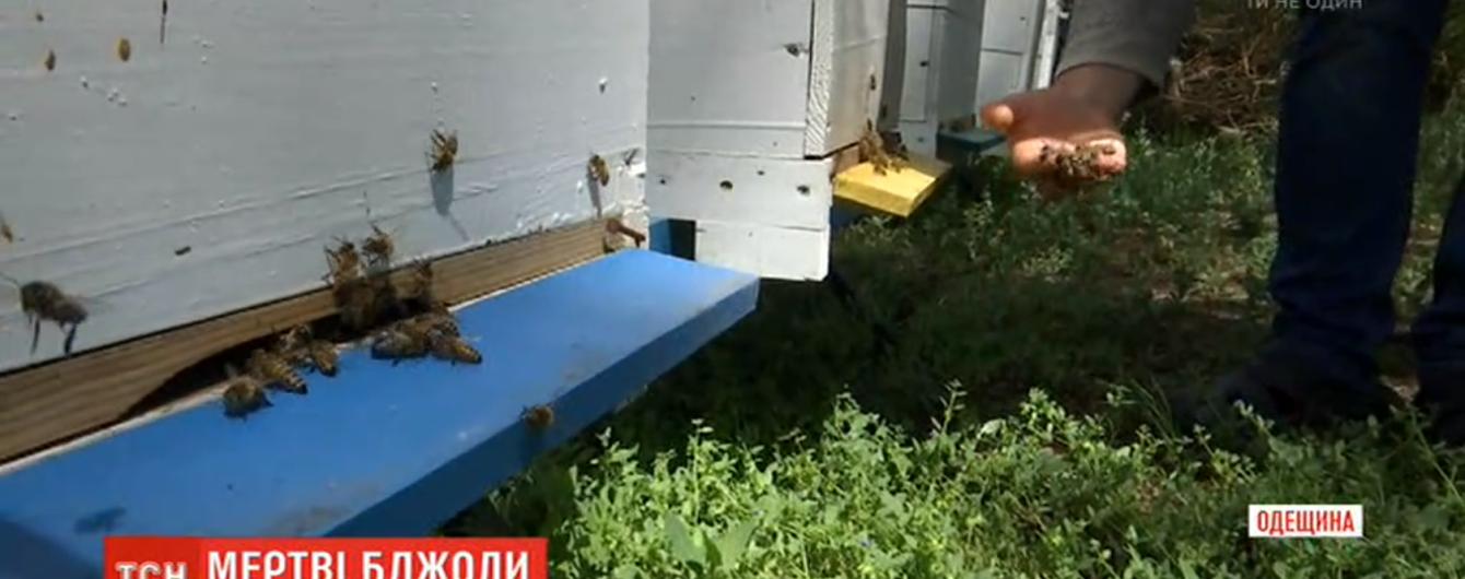 На Одещині загинули мільйони бджіл через отруту, якою фермер обробив поля рапсу