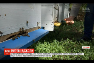 В Одесской области погибли миллионы пчел из-за яда, которым фермер обработал поля рапса