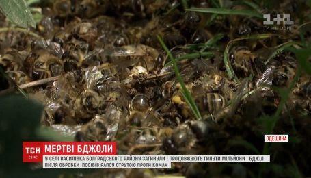 В Одесской области погибли и продолжают умирать миллионы пчел