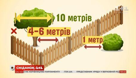 На каком расстоянии от границы можно сажать деревья