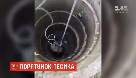 В противогазах в подземелье: в Днепре спасли собаку, которая провалилась на 15-метровую глубину