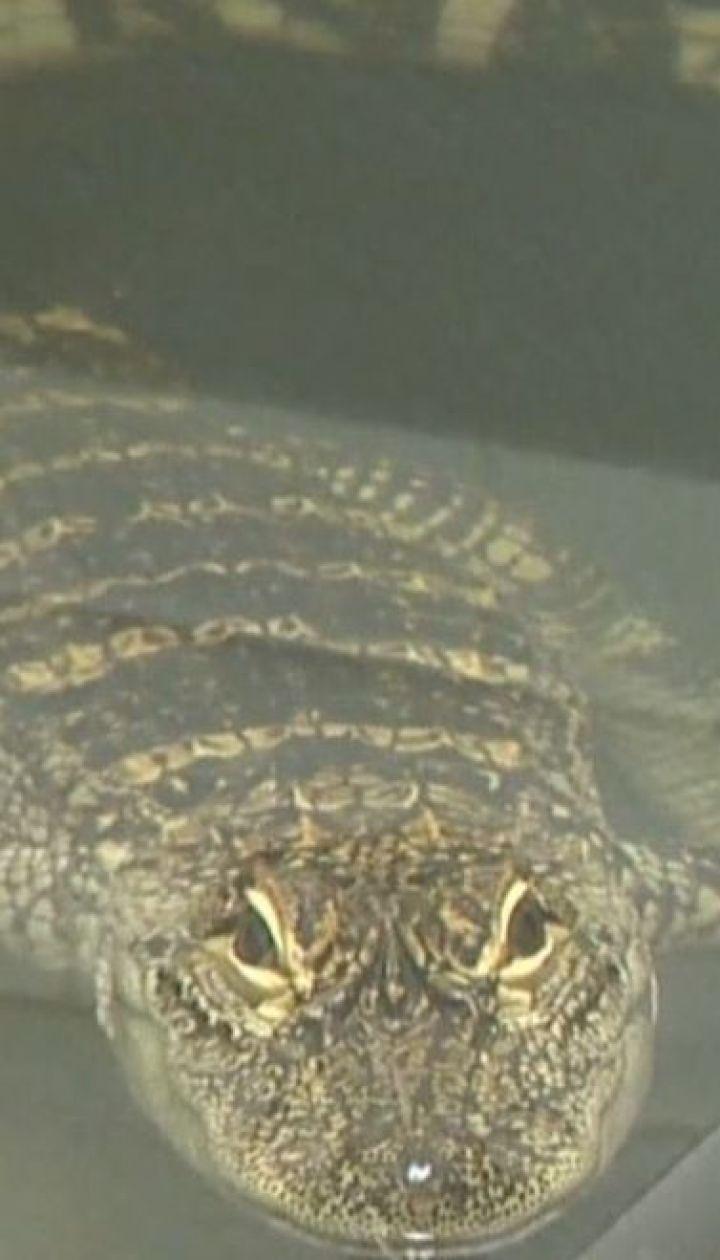 В Питтсбурге на берегу реки американская семья случайно заметила аллигатора