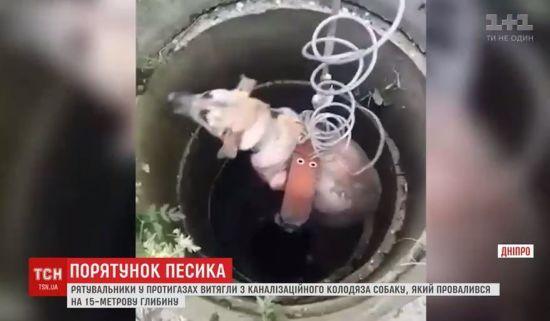 У Дніпрі для порятунку безпритульного собаки з колодязя розгорнули цілу операцію