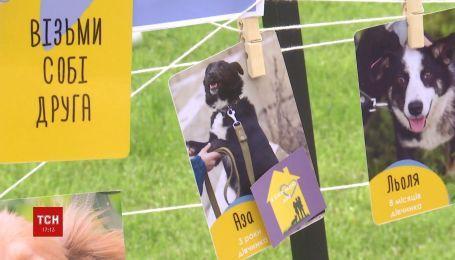 Бездомным собачкам искали хозяев в рамках фестиваля в Луцке