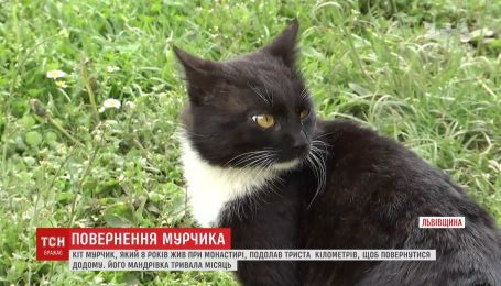 Кіт Мурчик подолав 300 кілометрів, аби повернутись у рідний монастир