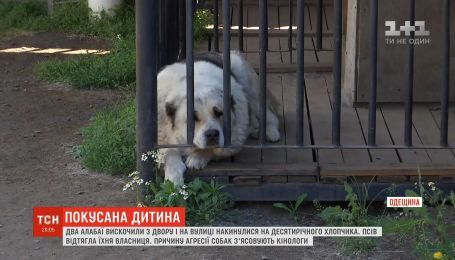В Одесской области на третьеклассника набросились два алабая