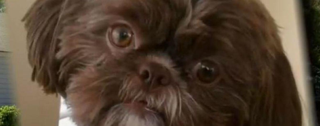 У США приспали здорового собаку, щоб поховати його з власницею