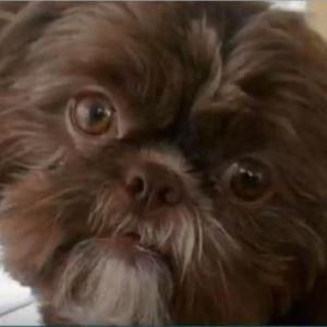 У США приспали здорового собаку, щоб поховати з його власницею