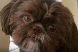В США усыпили здоровую собаку, чтобы ее похоронить с хозяйкой