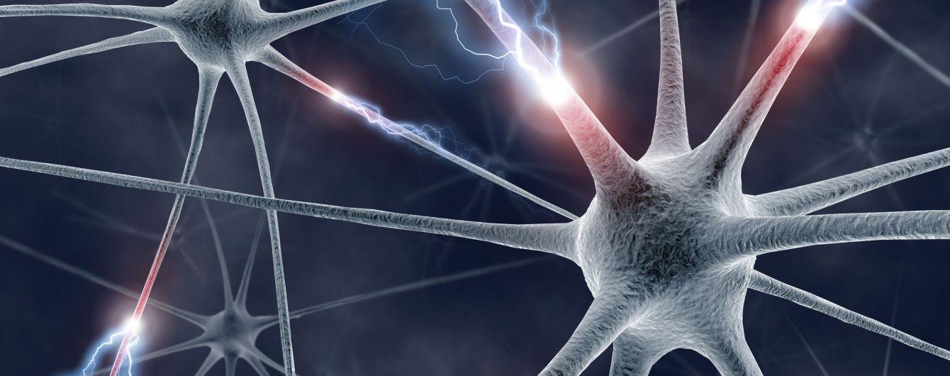 """Американські вчені виростили мозок, який вчиться """"думати"""""""