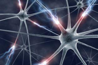 """Американские ученые вырастили мозг, который учится """"думать"""""""