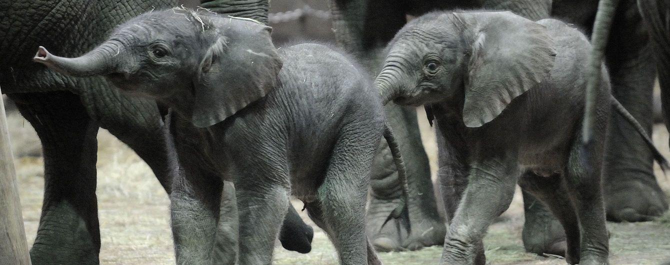 """Учені прогнозують масштабне """"здрібнішання"""" тварин – слони та носороги можуть зникнути з лиця Землі"""