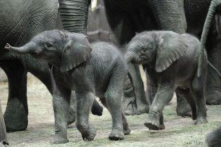 В крупнейшем парке Зимбабве полсотни слонов погибли голодной смертью