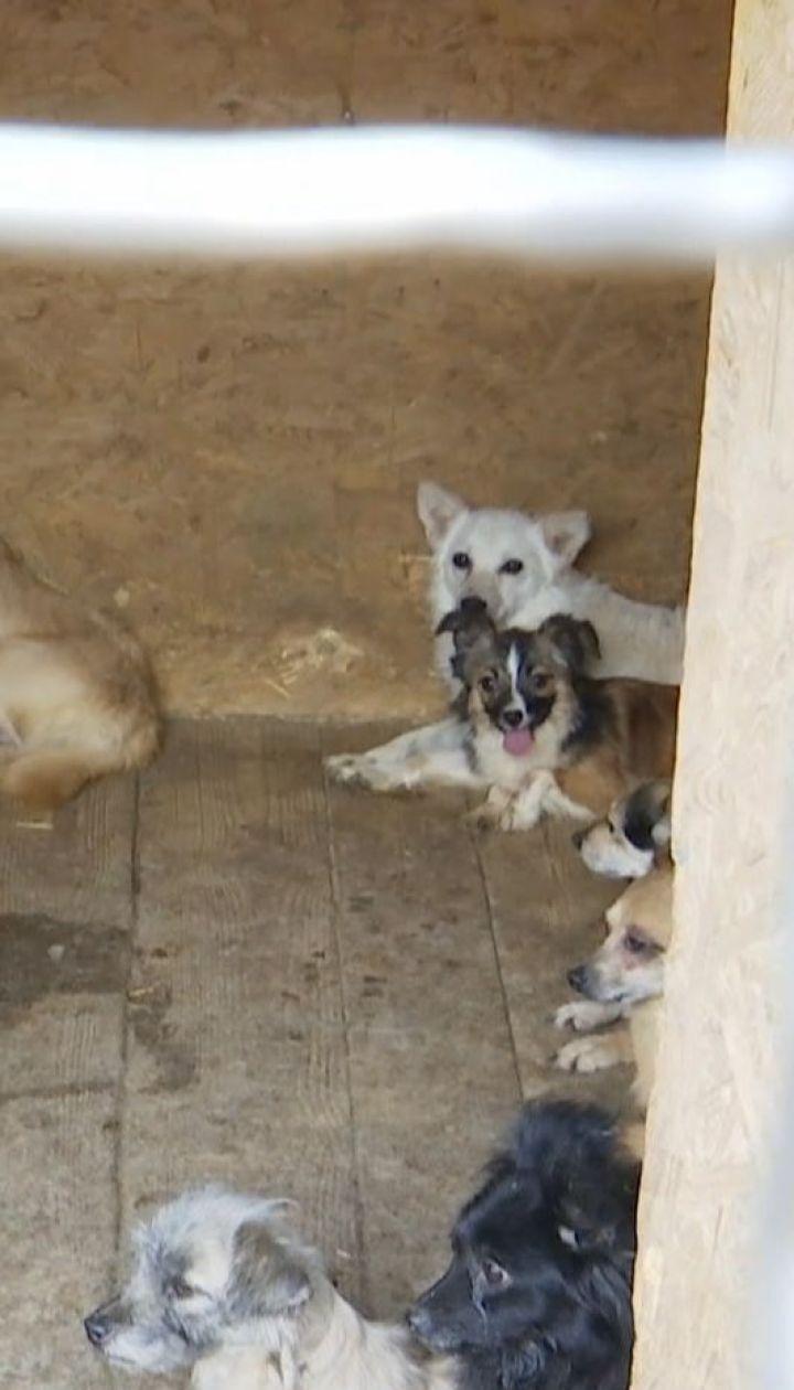 Десятки виснажених собак звільнили з полону в Дніпрі