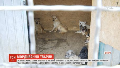 Десятки истощенных собак освободили из плена в Днепре