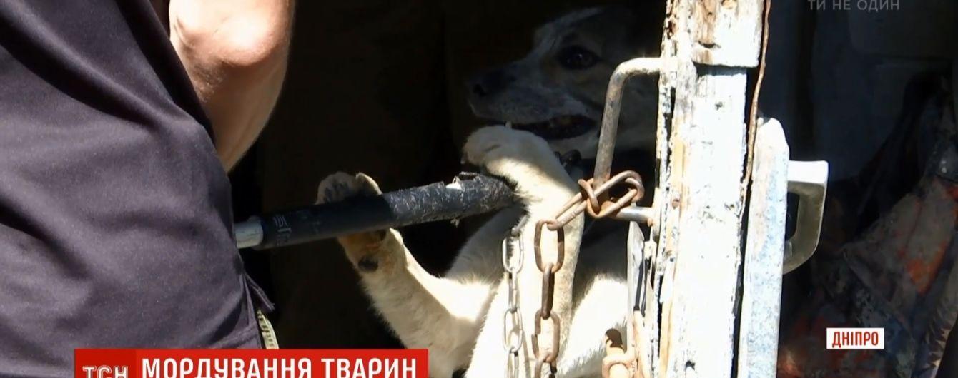 Собачья тюрьма: в Днепре пенсионерка держала в ужасных условиях 35 животных