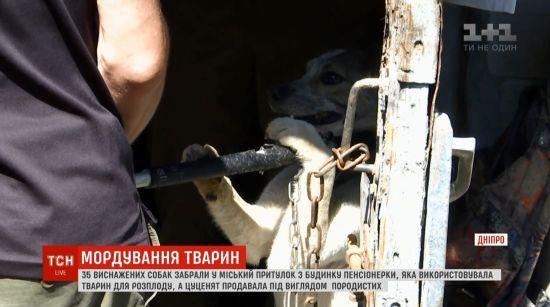 Собача в'язниця: у Дніпрі пенсіонерка тримала в жахливих умовах 35 тварин