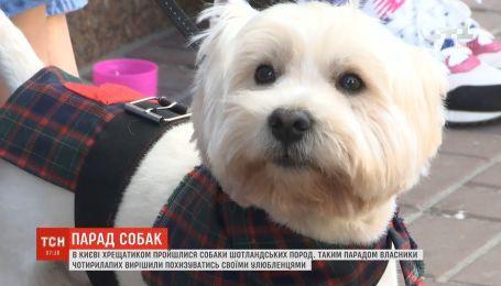 У Києві Хрещатиком пройшов парад шотландських тер'єрів
