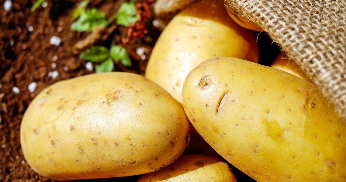 Україна суттєво збільшила імпорт картоплі