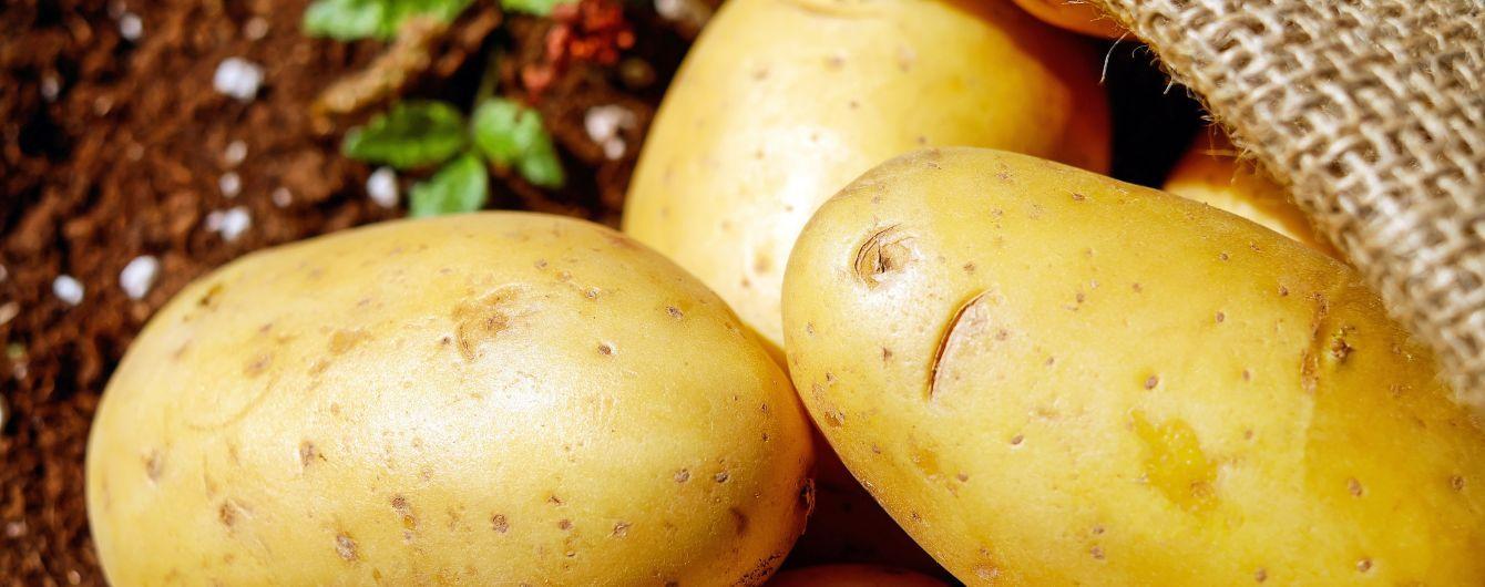 Украинские рынки завалили молодым картофелем