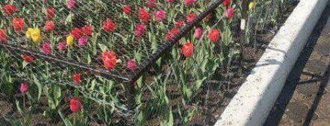 """""""Грядки суворого режиму"""". У російському Красноярську тюльпани захистили міцною сіткою"""