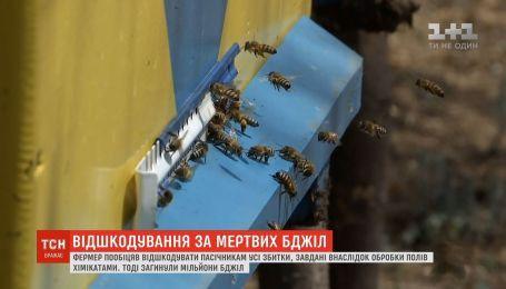 Фермер відшкодує бджолярам усі збитки, завдані внаслідок обробки полів хімікатами