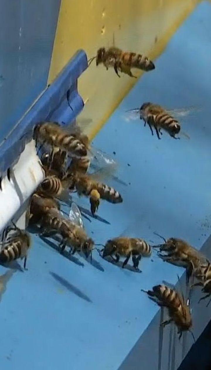 Фермер возместит пчеловодам все убытки, причиненные в результате обработки полей химикатами