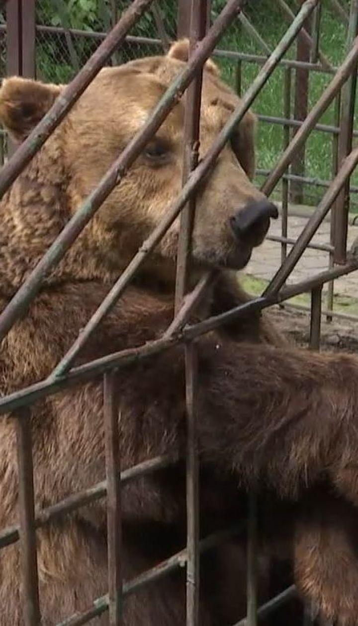 В Хмельницкой области медведя держат в тесном вольере ресторана