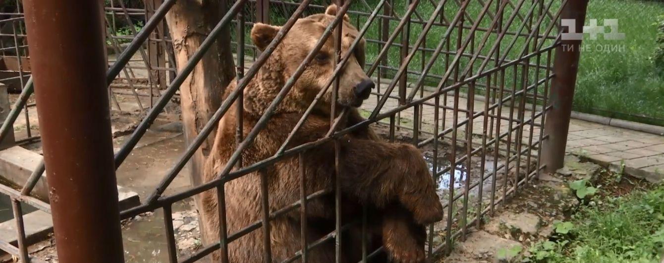 Зоозащитники хотят спасти карпатского медведя из ресторана в Каменце-Подольском