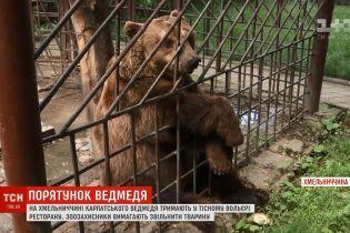 Зоозахисники хочуть урятувати карпатського ведмедя із ресторану в Кам'янці-Подільському