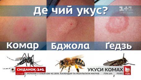 Як розпізнати небезпечний укус комахи і правильно на нього зреагувати - поради дерматолога
