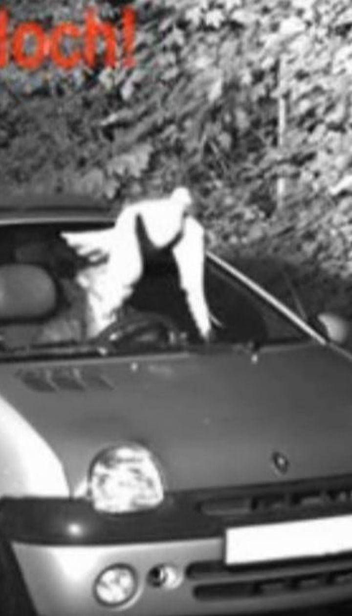 Диво на дорозі: у Німеччині голуб урятував чоловіка від штрафу