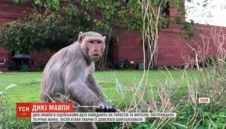 Дикие обезьяны в индийском Дели нападают на туристов и местных жителей