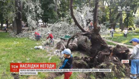 Сильний вітер в Одесі повалив десятки дерев