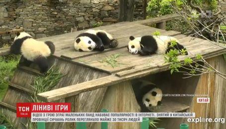 Видео ленивых игр маленьких панд приобретает популярность в Сети