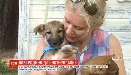 В Виннице устроили благотворительное мероприятие, чтобы найти дом бездомным животным